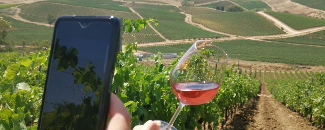 foto nella foto di bicchiere di vino in vigna